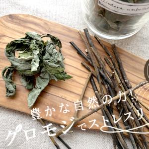 """豊かな自然の力!クロモジでストレスリリース☆""""Foods"""""""