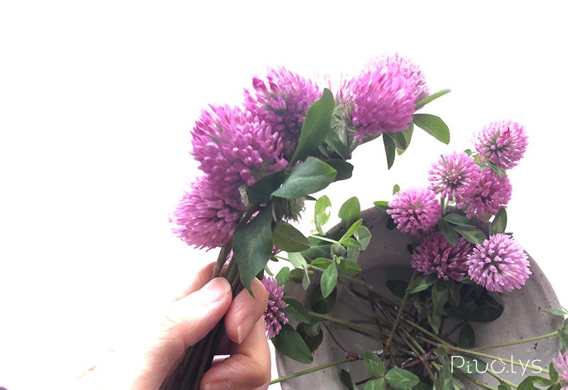 レッドクローバー(ムラサキツメクサ)の花輪作り