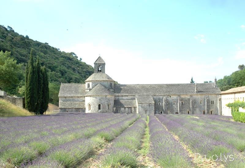 セナンク修道院のラベンダー畑